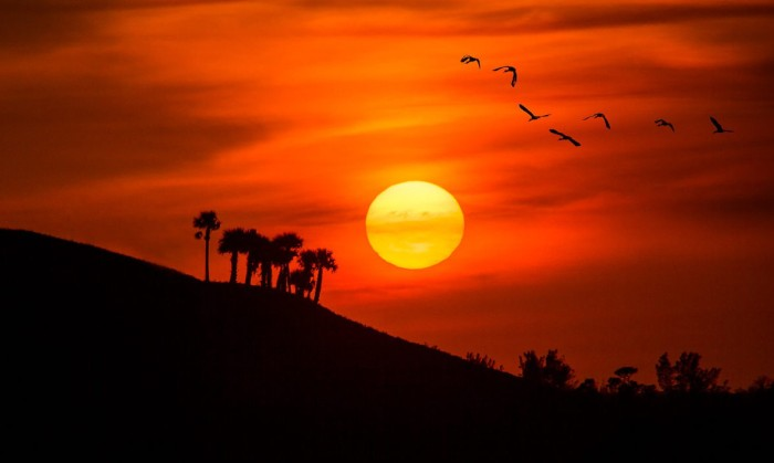 Birds Flying into the Sunset Over the Hill in Florida