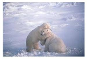 ijsberen knuffel